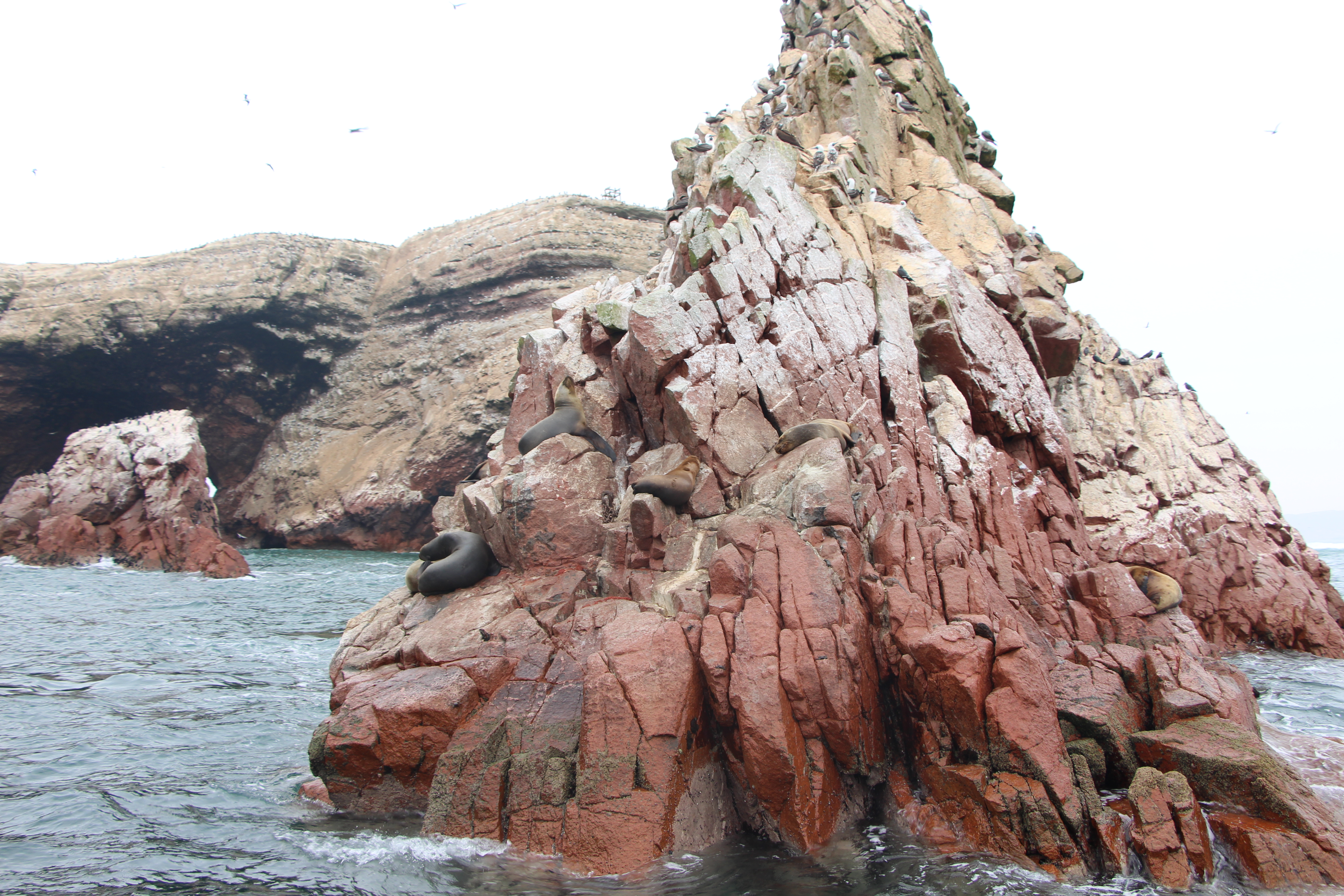 Ballestas Islands Tour