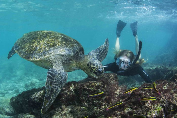 Galapagos, Machu Picchu & Amazon Tour