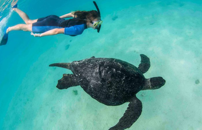 Galapagos Islands Turtle Tour