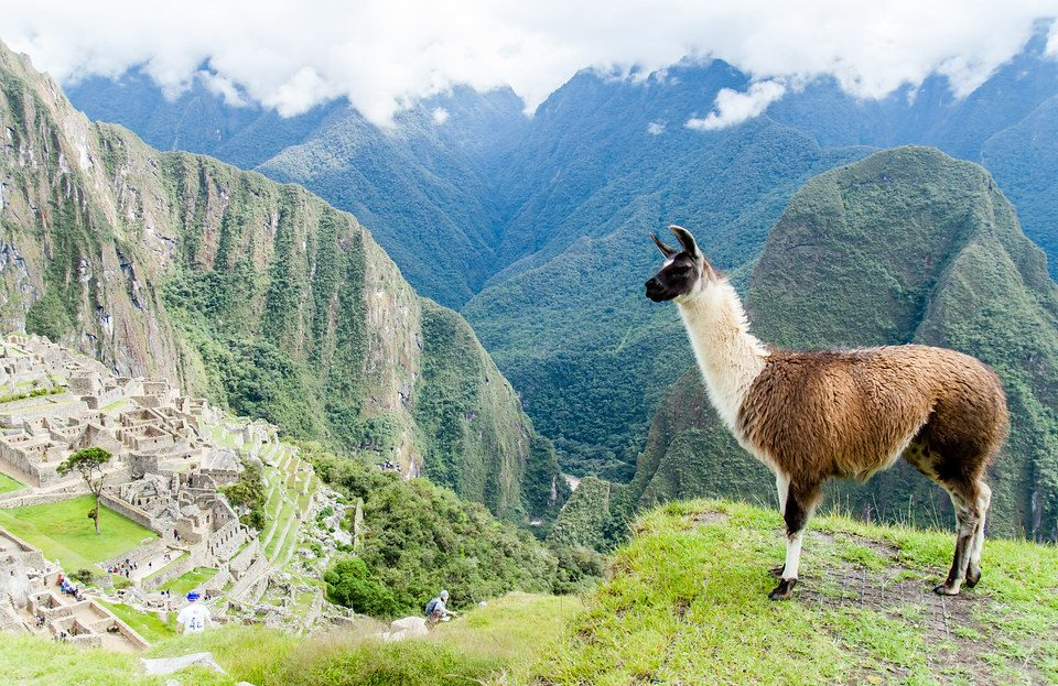 Differences between Llamas, Alpacas, Vicuñas & Guanacos